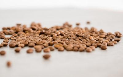 Kaffee Aroma: So entsteht der vielfältige Kaffeegeschmack